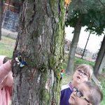 Mikroturystyka - uczniowie opowiadali co ludziki widzą z pnia sosny. Dziewczynka i chłopiec obserwują pień sosny.