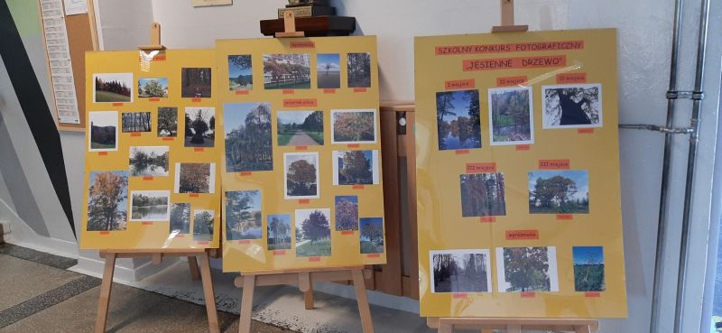 Zdjęcie przedstawia fotografie, przyniesione przez uczniów klas 4 i 5, na szkolny konkurs foto Jesienne drzewo. Fotografie zrobione przez uczniów zostały umieszczone na trzech planszach ustawionych na sztalugach na szkolnym korytarzu.