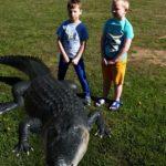 Chłopcy obserwują aligatora -rozszerzona rzeczywistość.