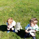 Chłopcy obserwują kotka w rozszerzonej rzeczywistości.