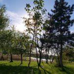 Drzewa nad jeziorem_