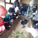 Uśmiechnięte dzieci obserwują czarnego króliczka.