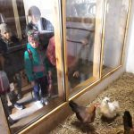 W kurniku pozują dzieciom kury.