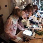 Dziewczynki obserwują roślinki pod binokularem.